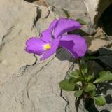 Géologie et flore de nos régions