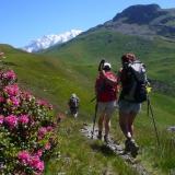 La Montagne d'Outray et des rhododhendrons